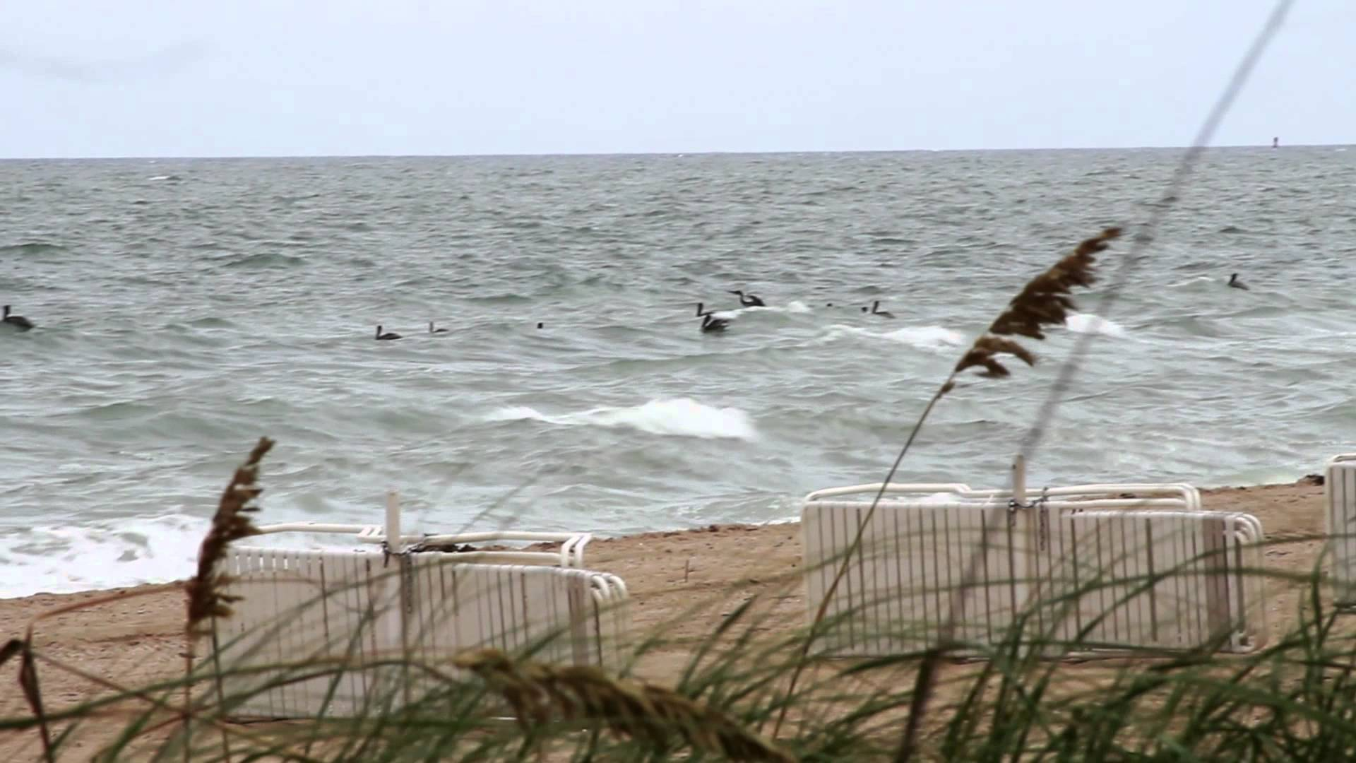 2012 Mullet Run Highlight – Pelican