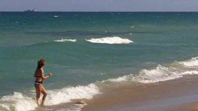 Amazing Bait Ball Off The Beach