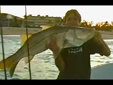 Best Tarpon and Snook fishing Fort Lauderdale  Happy Bait