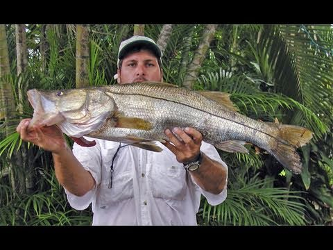 Big Snook Fishing Florida Captain Jeff Maggio