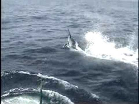 Captian Jeff Black Marlin Fishing Trip
