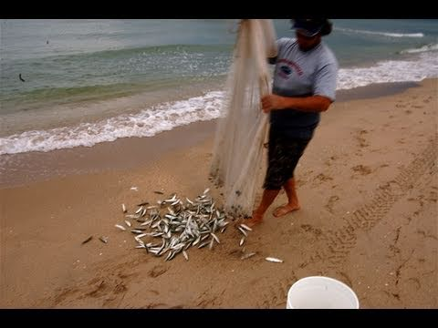 Extreme Cast Netting Mullet From The Beach