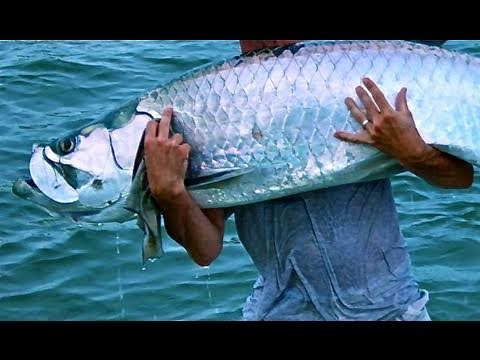 Extreme Tarpon Fishing