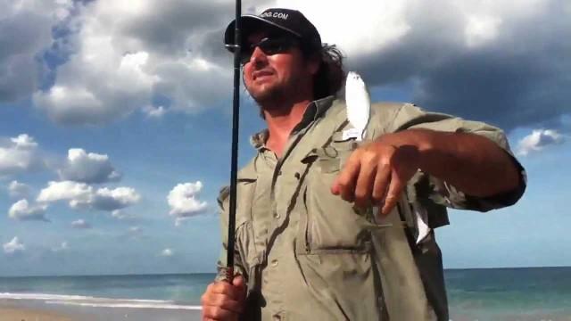Fishing Live Bait Fishing – Beach Pilchard