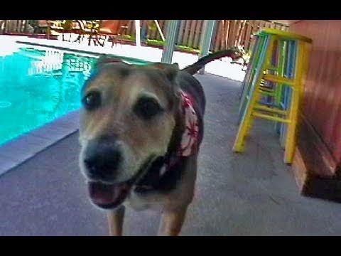 Hillarious Talking Dog Parody | Funny MTV Parody