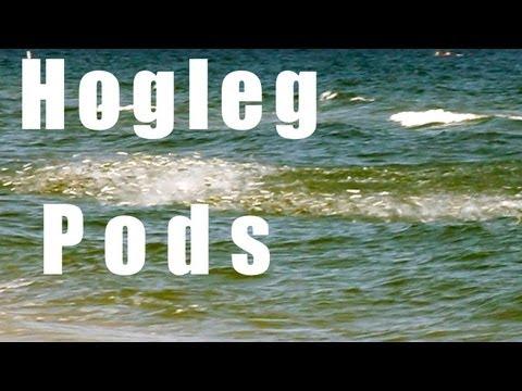 HOGLEG PODS – 2012 Mullet Run Highlight