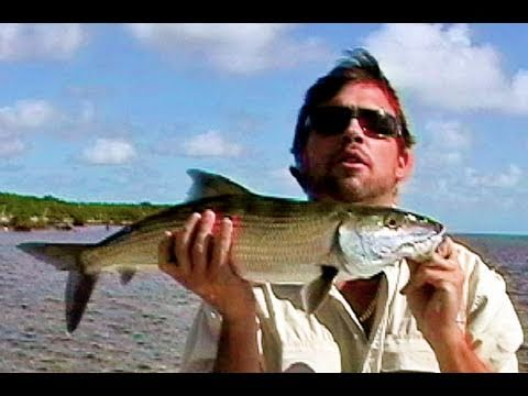 How Big is This Bonefish? Florida or Bahamas?