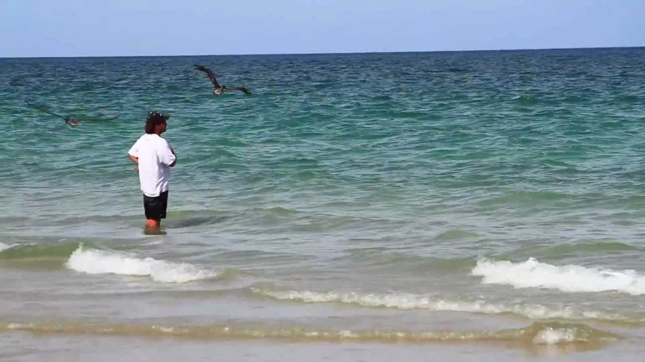 How To Catch Bait – Look For Diving Pelicans