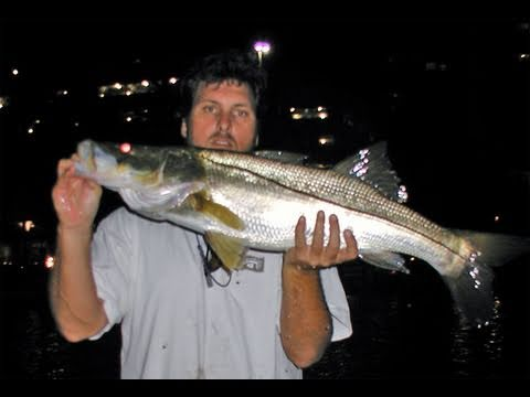 Incredible Night Snook Fishing