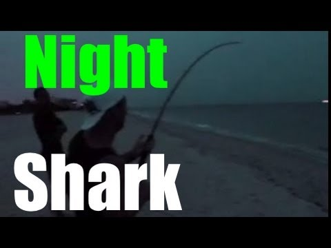 INSANE Beach Shark Fishing