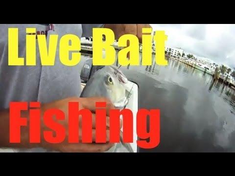 Inshore Fishing Basics
