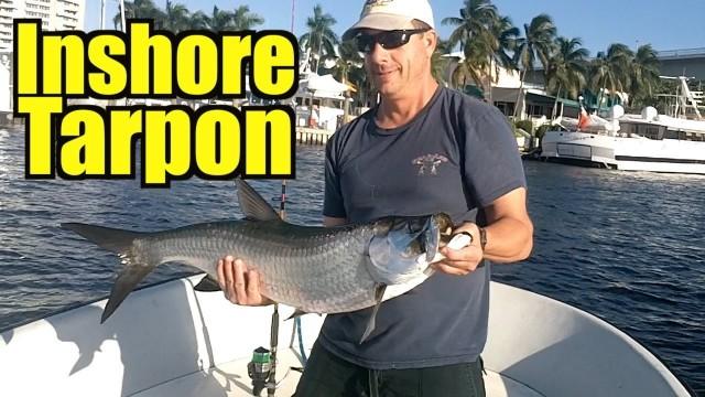 Inshore Tarpon Fishing 2013 Mullet Run