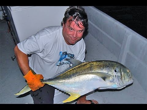 Monster Bruiser Jack Crevalle Fishing With Live Bait