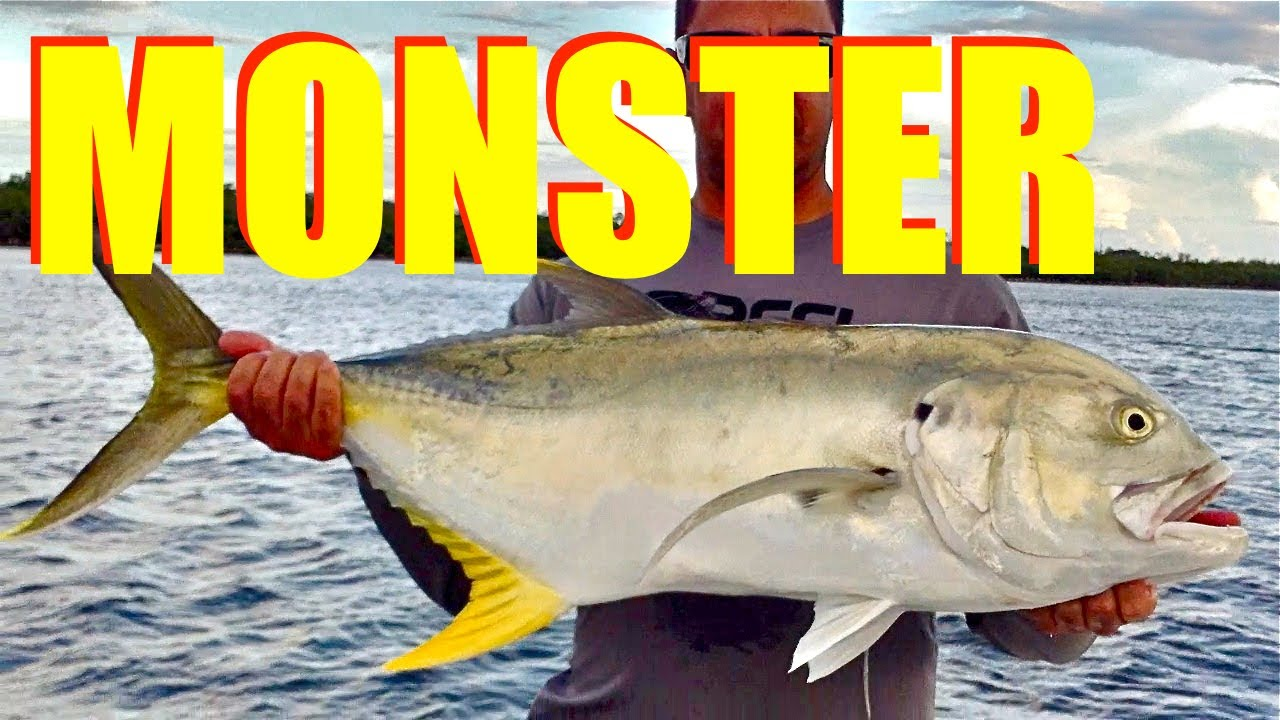 MONSTER FISH caught on Live Bait