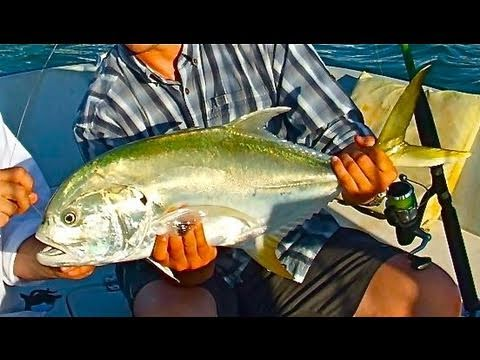 Monster Jack Fishing Inshore Live Bait