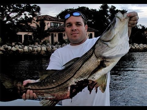 Monster SHARK Attacks Goliath Snook FISHING EPIC FAIL!