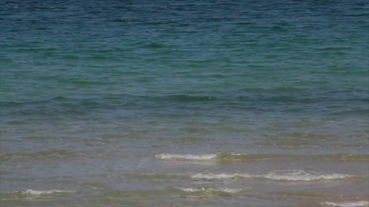 Mullet Run – LIve Bait Beach Check