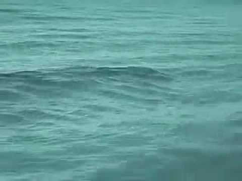 Ocean Monsters – Swim At Your Own Risk