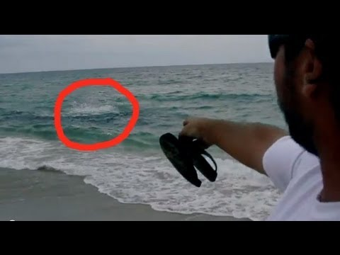 SHARK ATTACK in 3 Feet of Water!