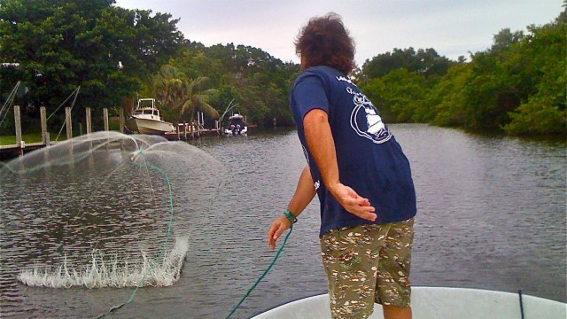 Silver Mullet Snook and Tarpon Bait