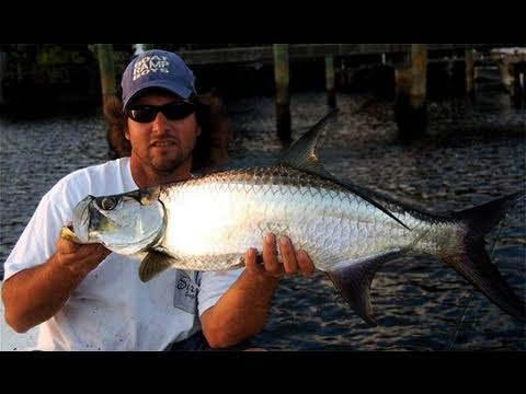Small Tarpon EVERYWHERE! Jumping Tarpon Highlight