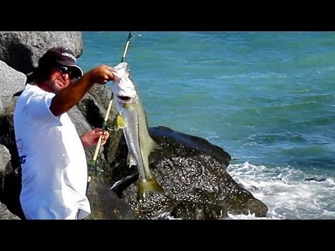 Snook Fishing Jetty – Live Bait
