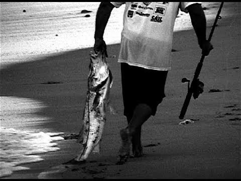 Snook Fishing – Mullet Run 2010 Fort Lauderdale
