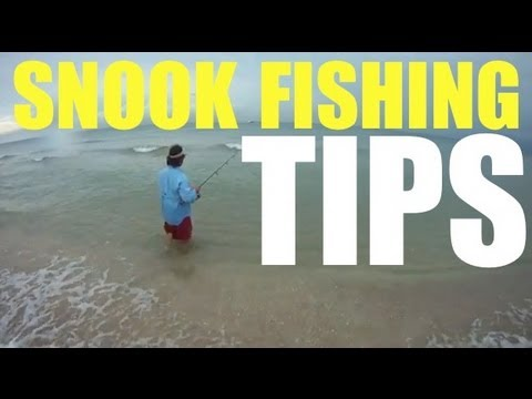 Snook Fishing Tip Live Bait Pilchard