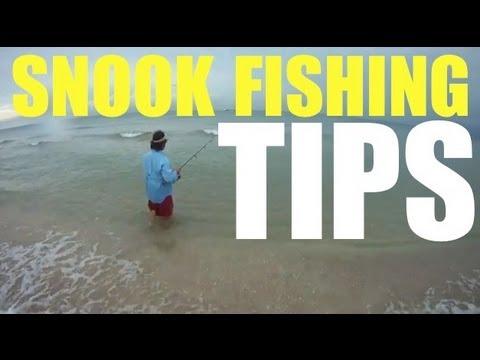 Snook Fishing Tip Live Bait Pilchard