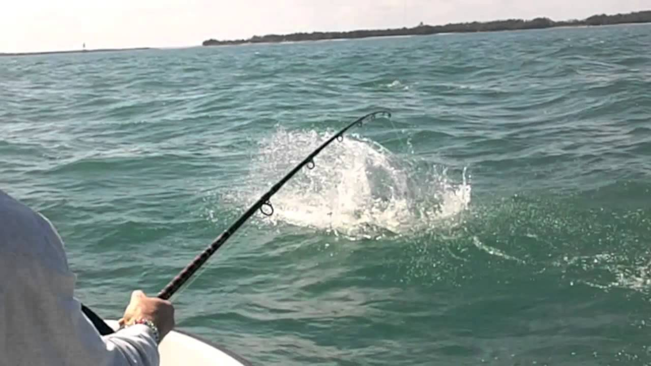 Monster Tarpon Highlight   Miami Fishing Jeff Maggio