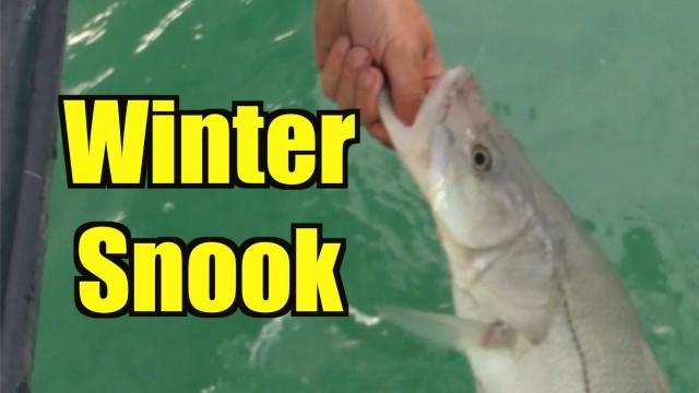 Winter Snook Fishing