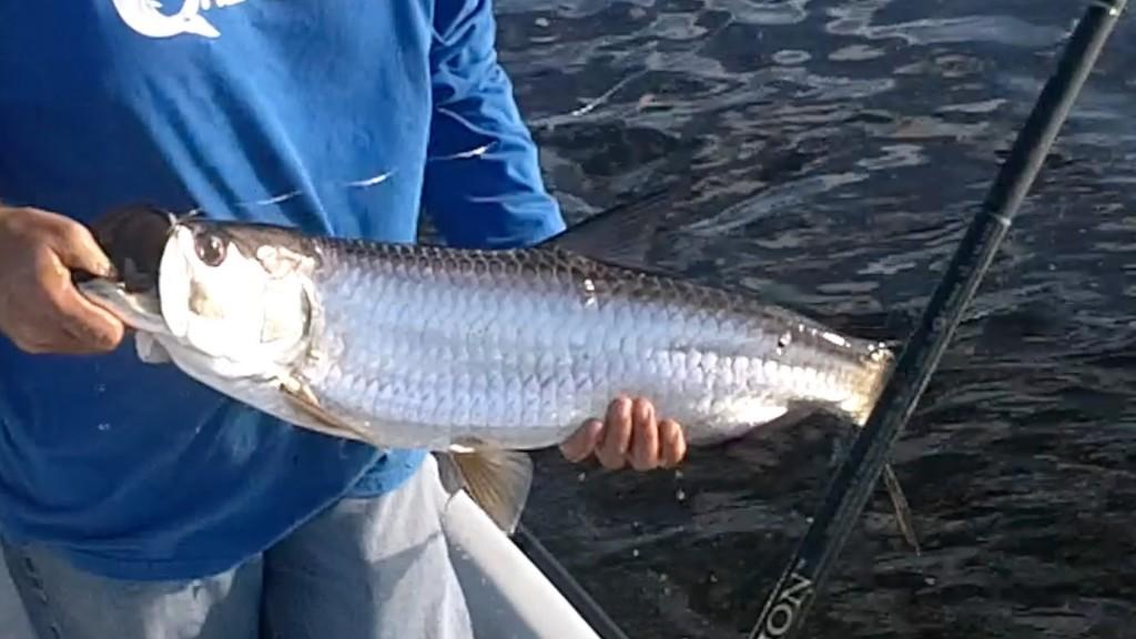 Watertime biscayne bay tarpon fishing video for Biscayne bay fishing