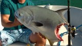 Trophy Permit Gets Sharked – SHARK WEEK