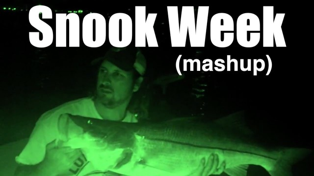 SNOOK FISHING VIDEO MASHUP – Lunkerdog