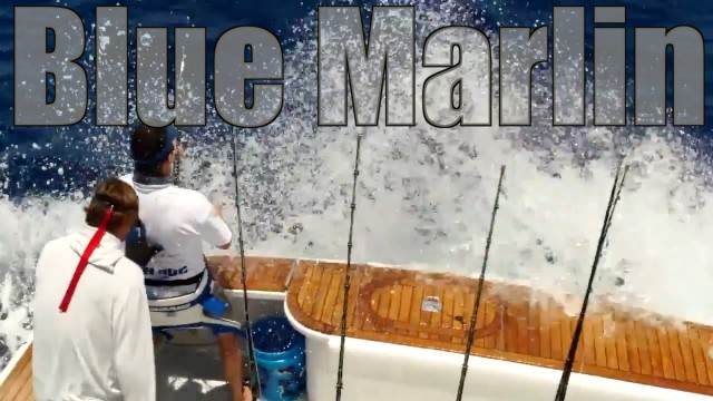 Game Fishing Blue Marlin on a Wesmac Fishing Boat