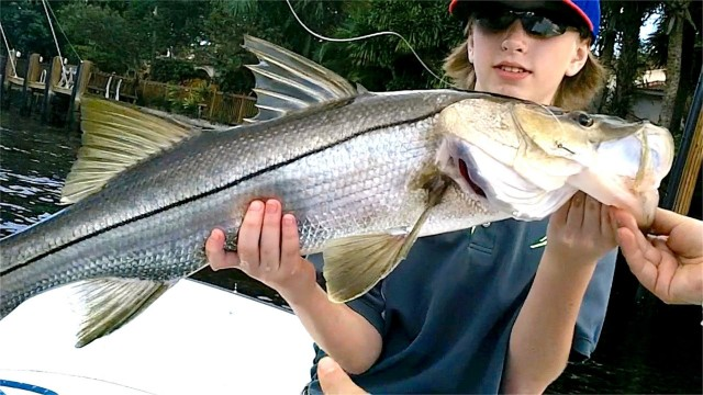 Inshore Snook Fishing – Live Shrimp Bait