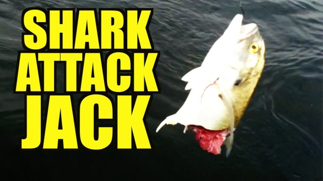 SHARK ATTACK on Fish!  Dont Swim In The Canals