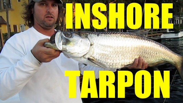 The Mullet Run – Inshore Florida Tarpon Fishing