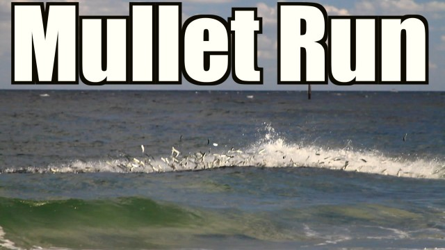 Mullet Run Highlight 2014