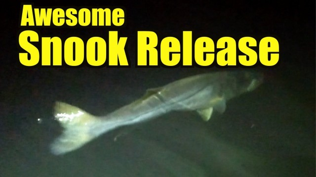 Big Snook Fishing – Fort Lauderdale Florida
