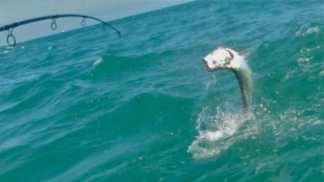 Light Tackle Tarpon Fishing