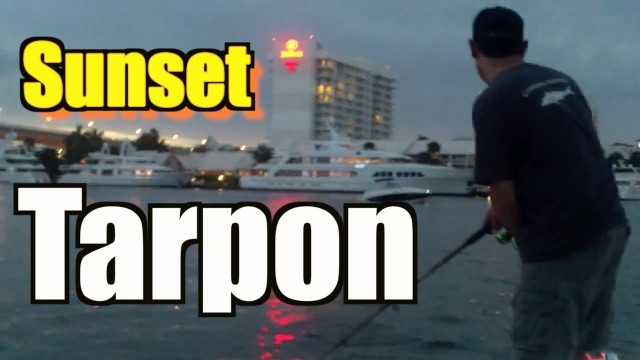 Live Bait Tarpon Fishing Highlight Fort Lauderdale Florida