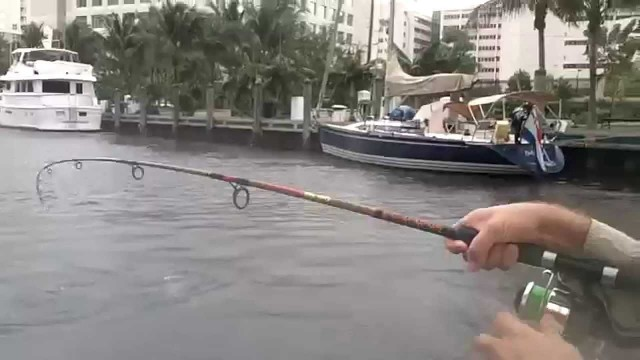Fun Fishing Inshore Tarpon on LIve Mullet