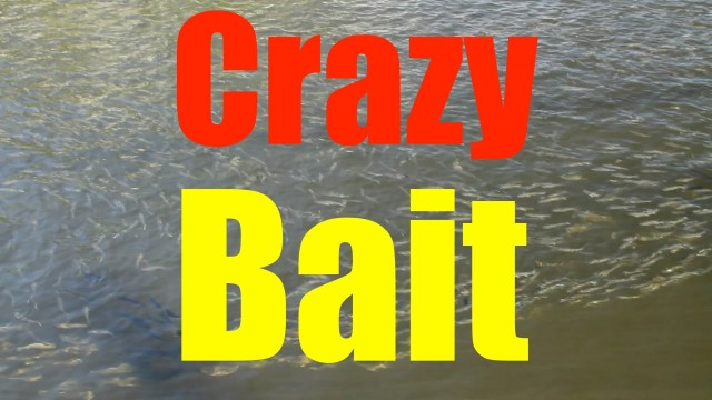Crazy Fishing Bait – Mullet Migration