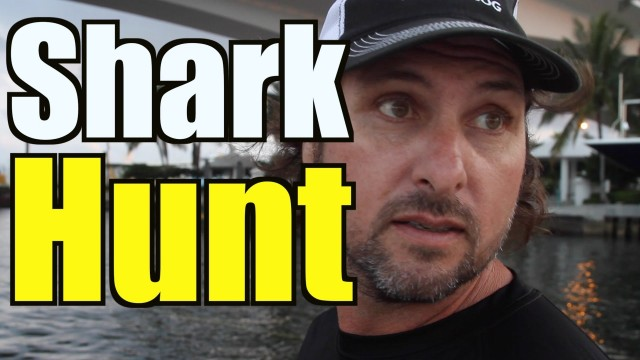 Capt Hunts Shark That Attacked Human