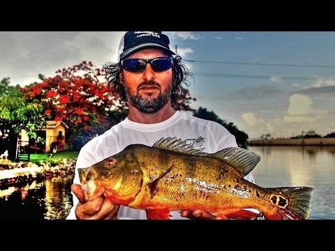 Extreme Peacock Bass Fishing  – BONUS Blooper Jeff eats it