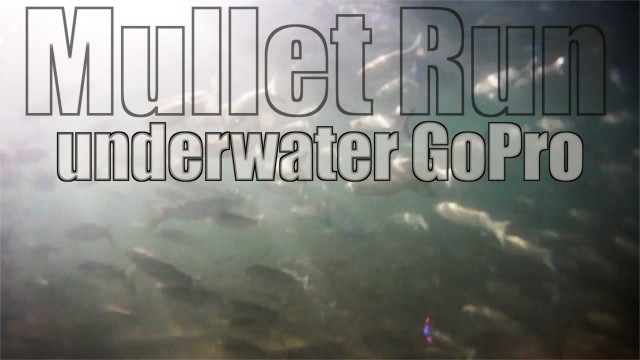 GoPro Underwater Mullet Run