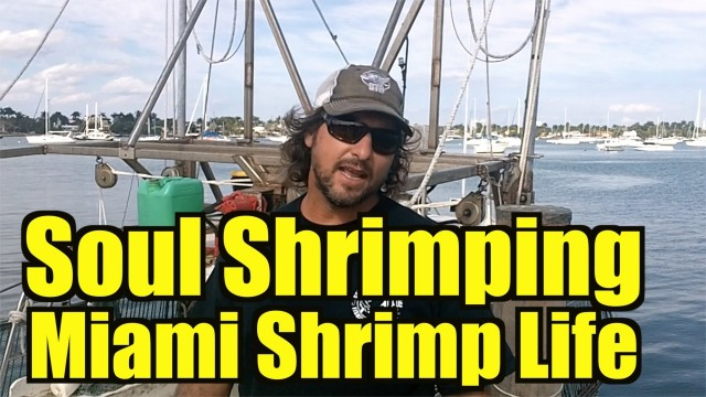 Soul Shrimping Miami REAL FISHERMAN OF SHRIMP LIFE