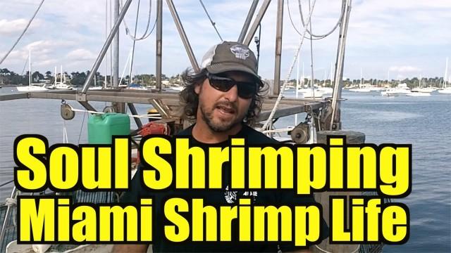 Soul Shrimping Miami REAL FISHERMAN OF SHRIMP LIFE