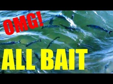 Bait Fish Everywhere